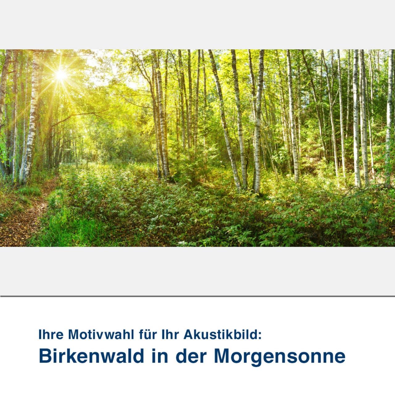 Akustikbild Motiv Birkenwald in der Morgensonne
