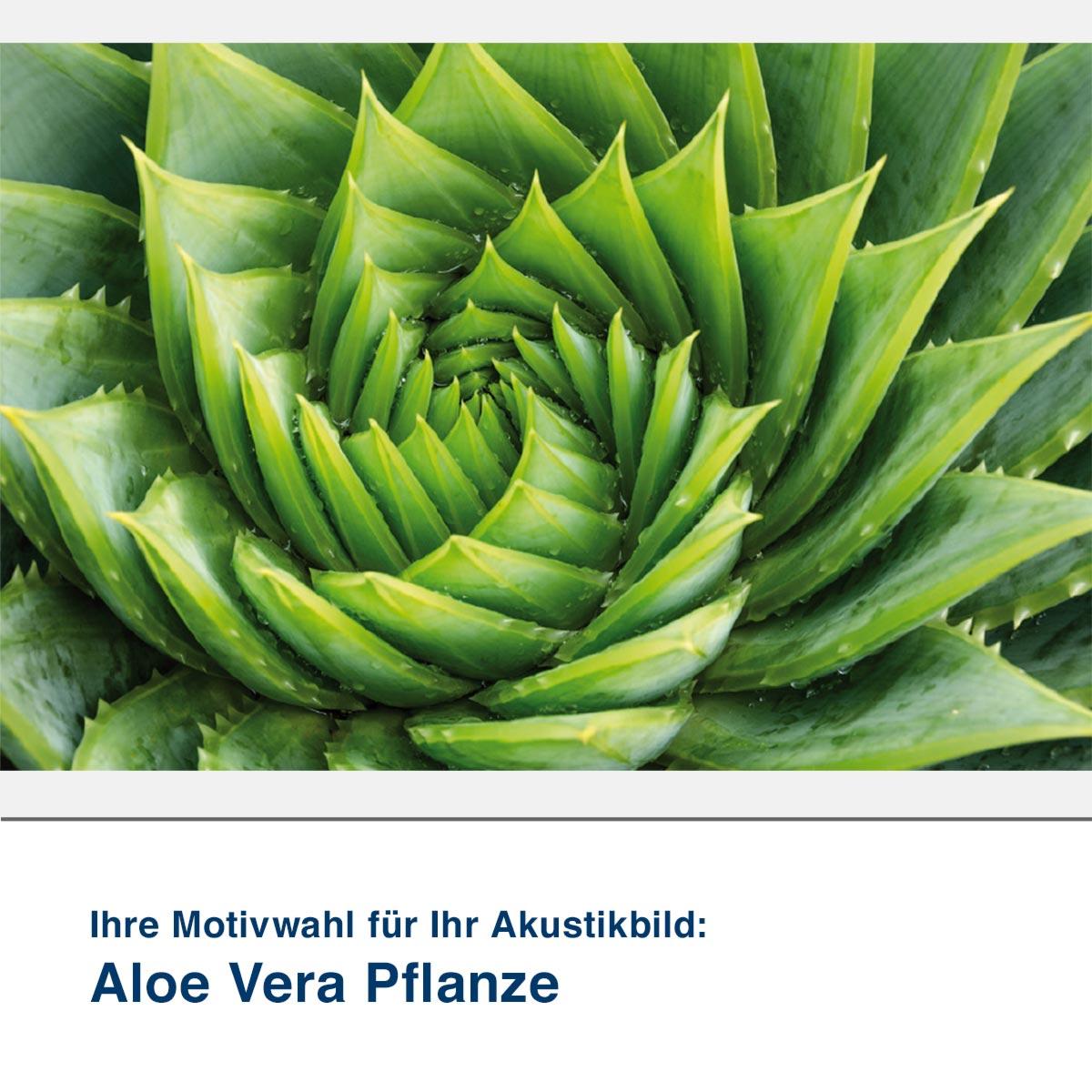 Akustikbild Motiv Aloe Vera Pflanze