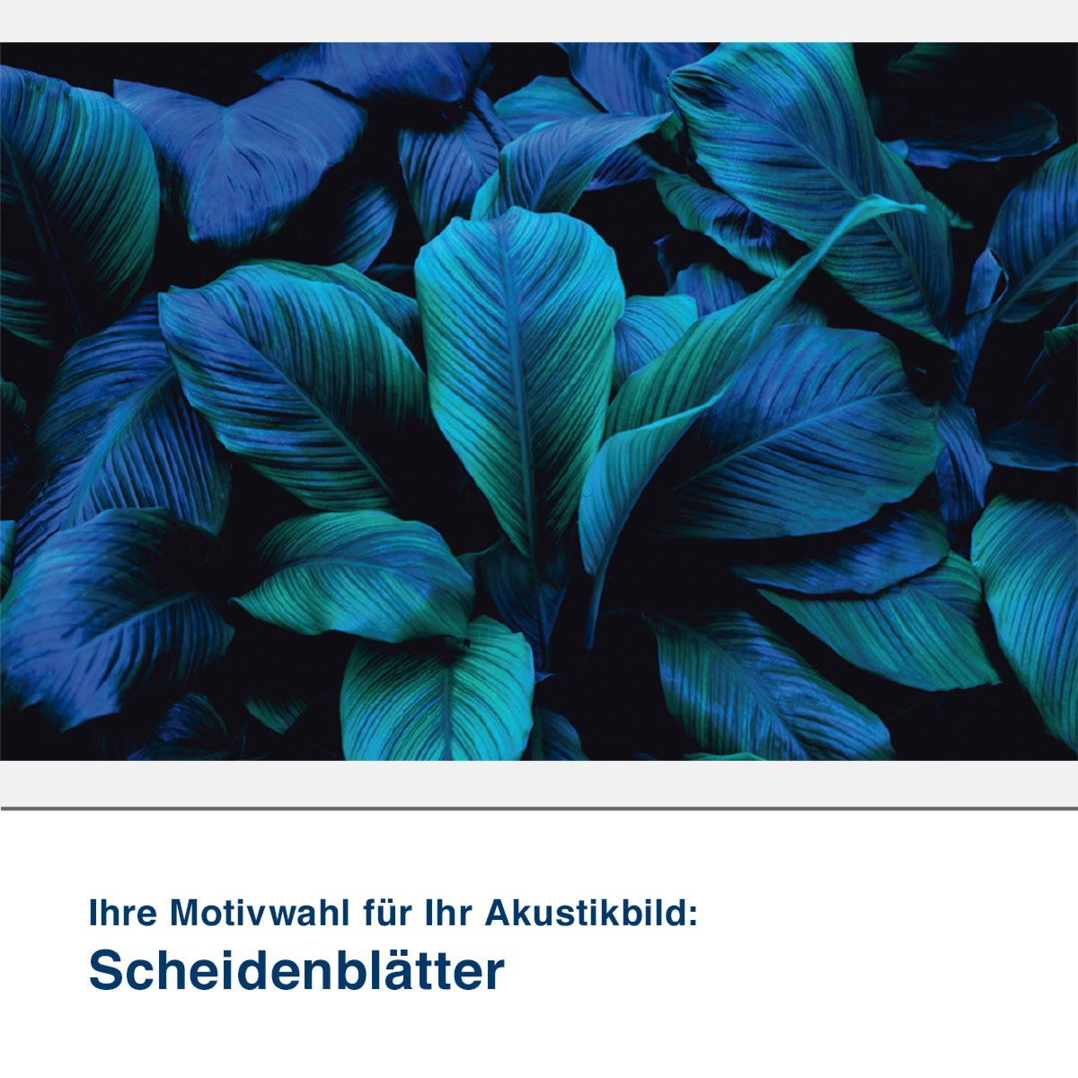 Akustikbild Motiv Scheidenblätter