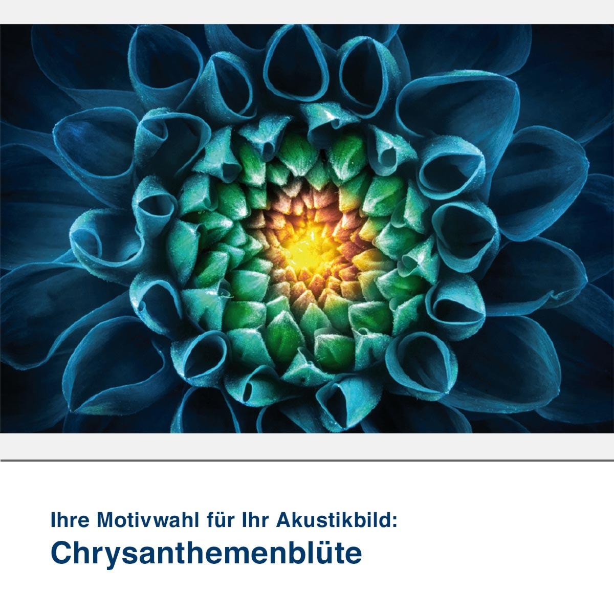 Akustikbild Motiv Chrysanthemenblüte