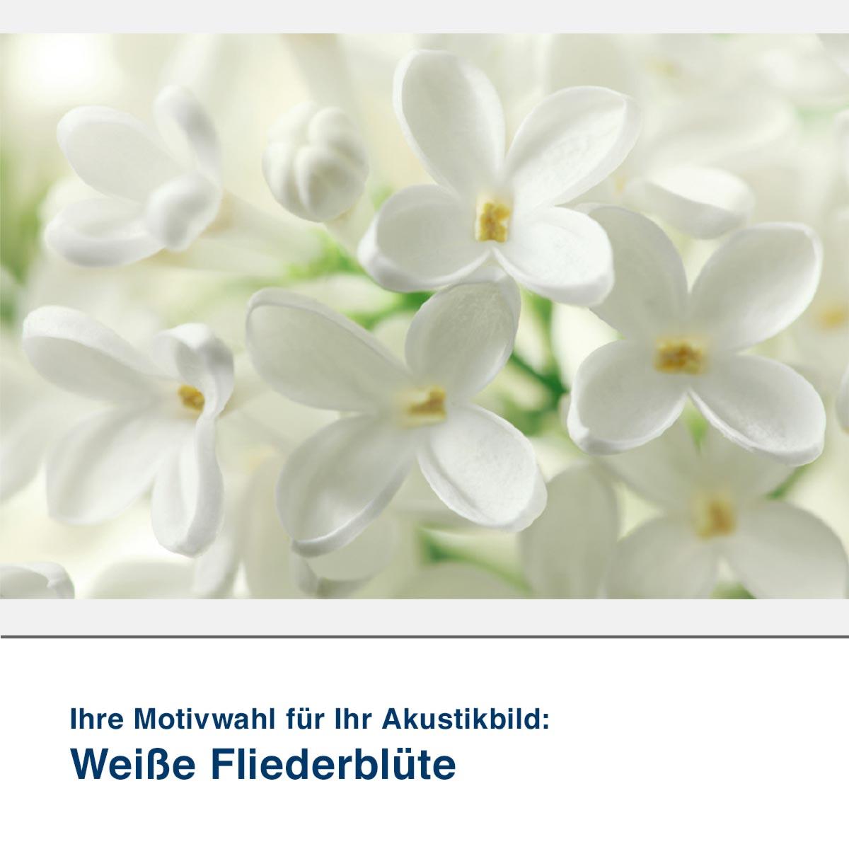 Akustikbild Motiv Weiße Fliederblüte