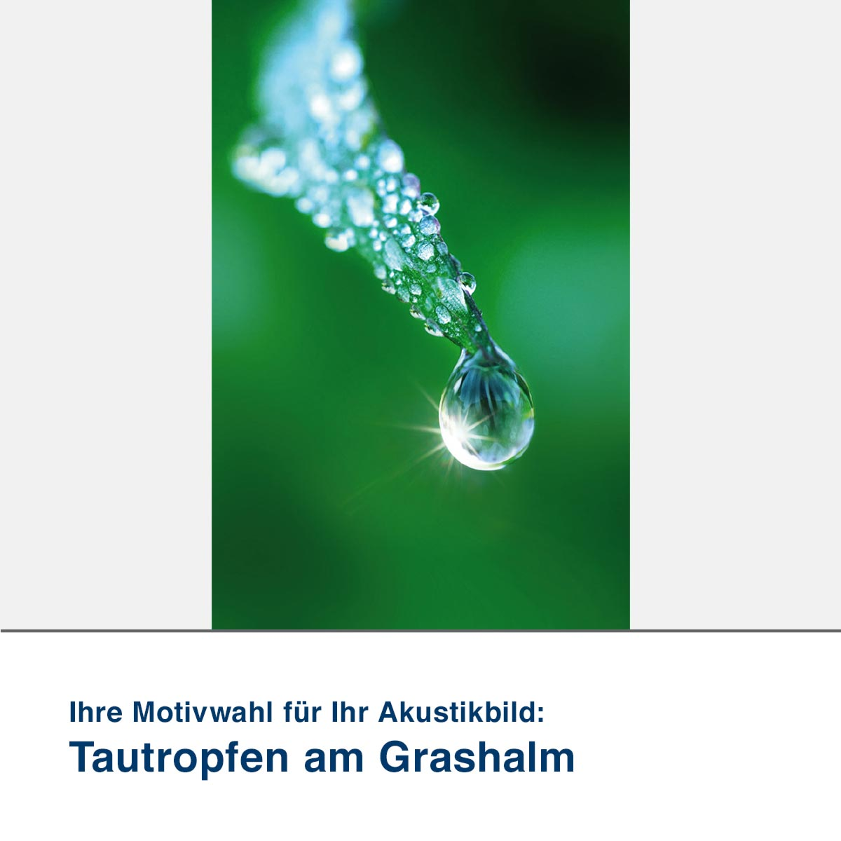 Akustikbild Motiv Tautropfen am Grashalm