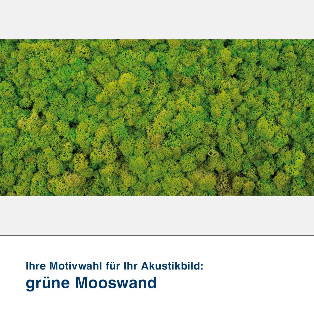 Akustikbild Motiv grüne Mooswand