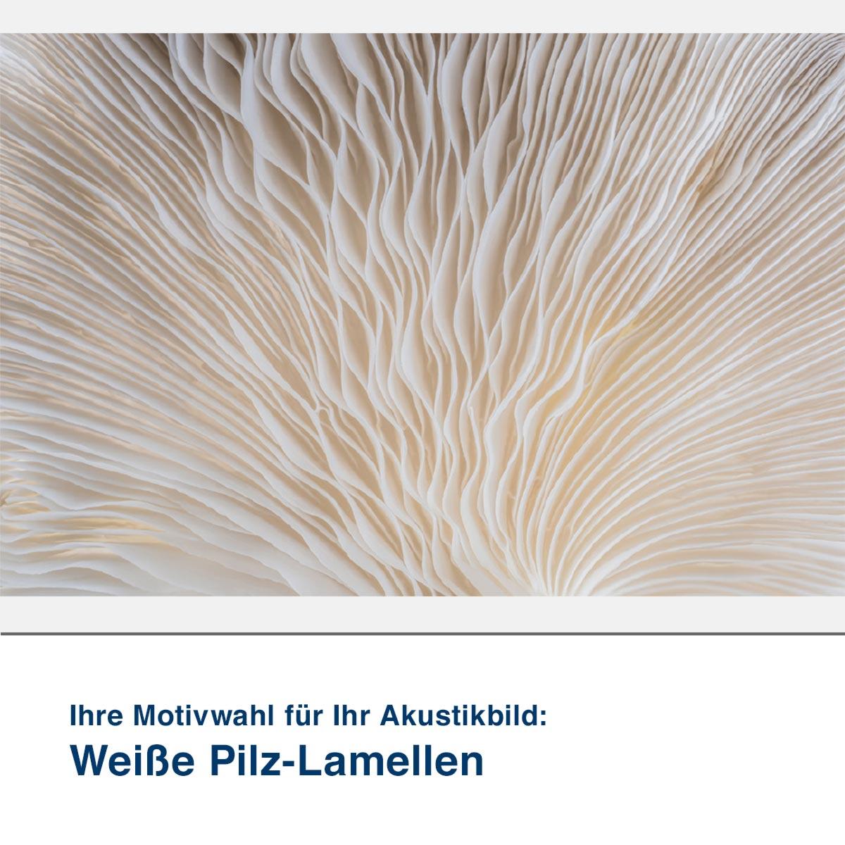 Akustikbild Motiv Weiße Pilz-Lamellen
