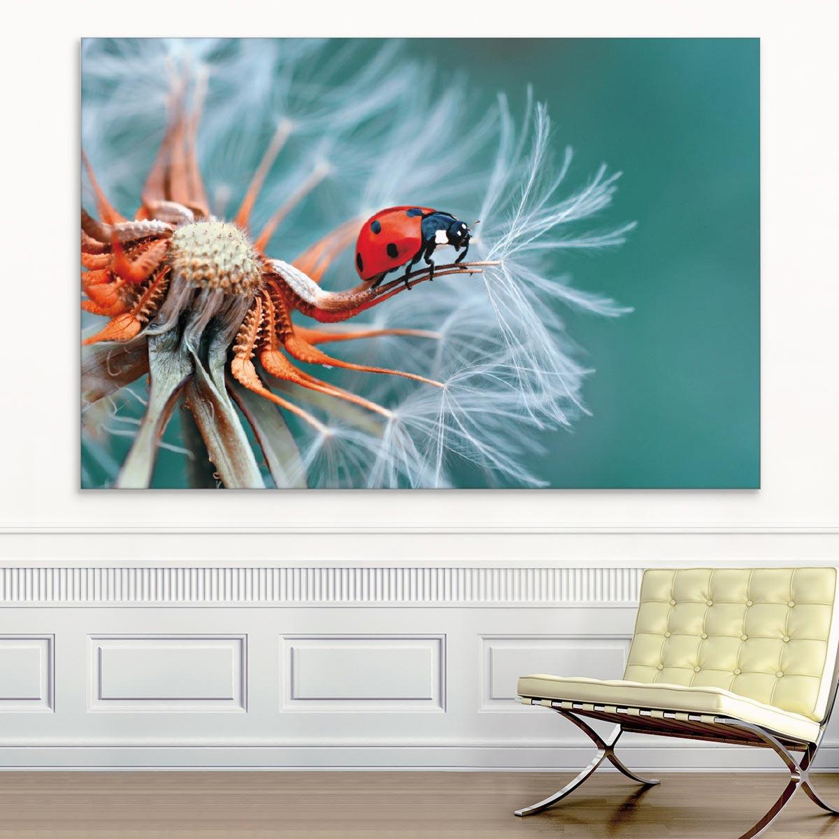 Akustikbild Marienkäfer auf einer Pusteblume