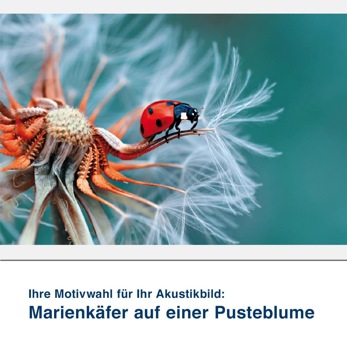 Akustikbild Motiv Marienkäfer auf einer Pusteblume
