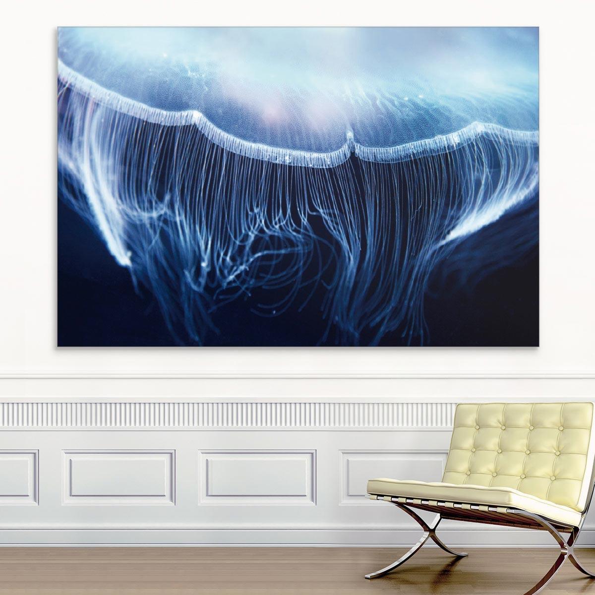 Akustikbild Qualle im Meer
