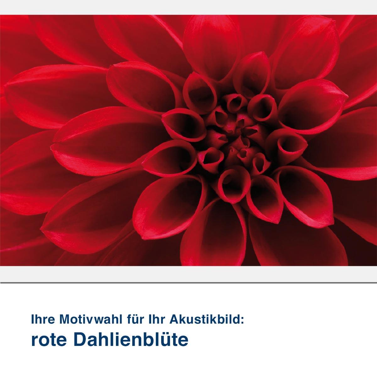 Akustikbild Motiv rote Dahlienblüte
