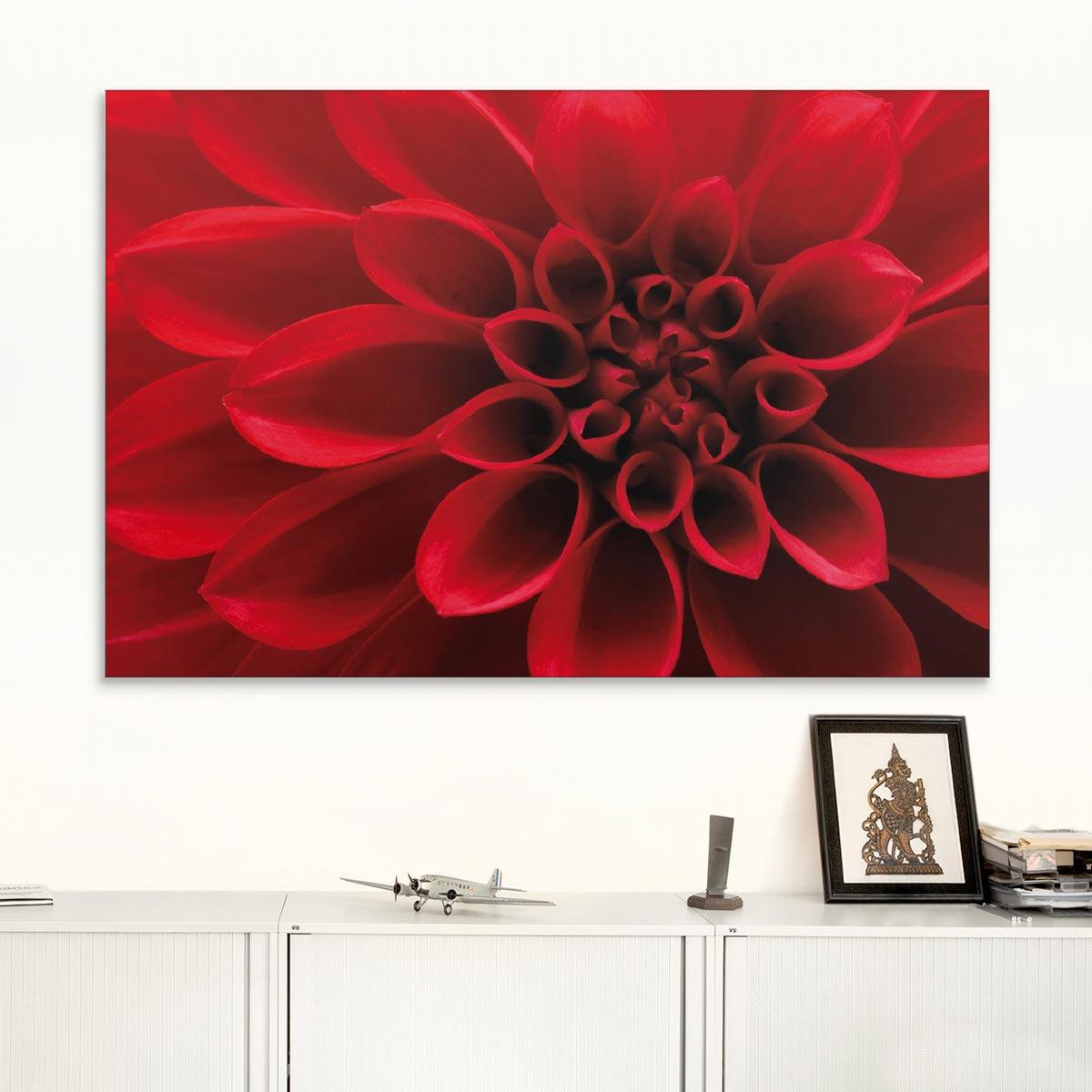 Akustikbild rote Dahlienblüte