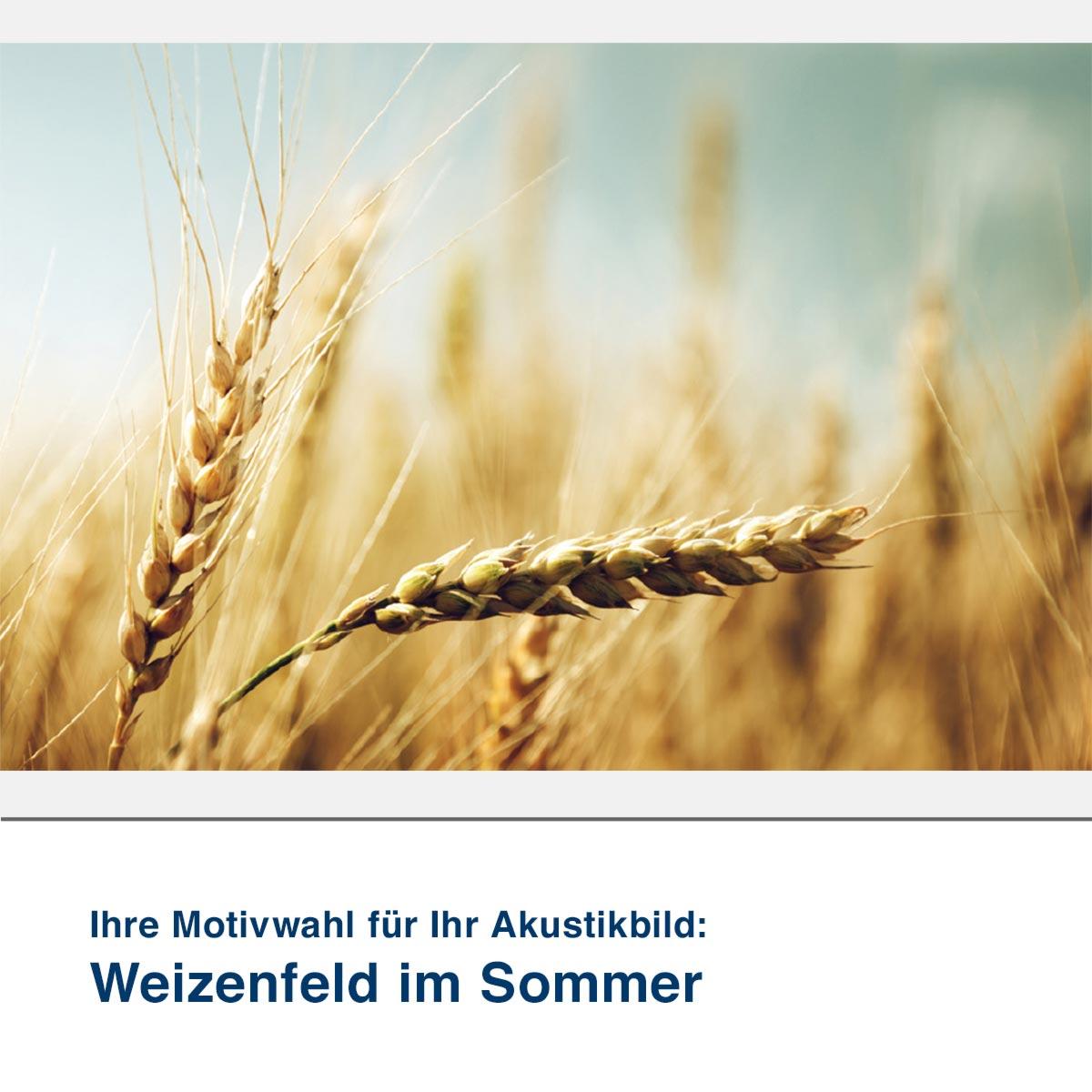 Akustikbild Motiv Weizenfeld im Sommer