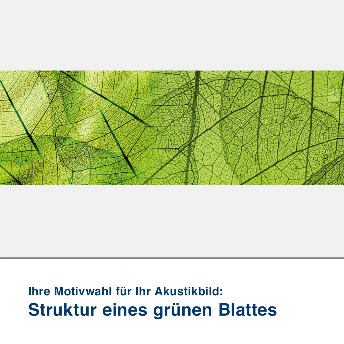 Akustikbild Motiv Struktur eines grünen Blattes