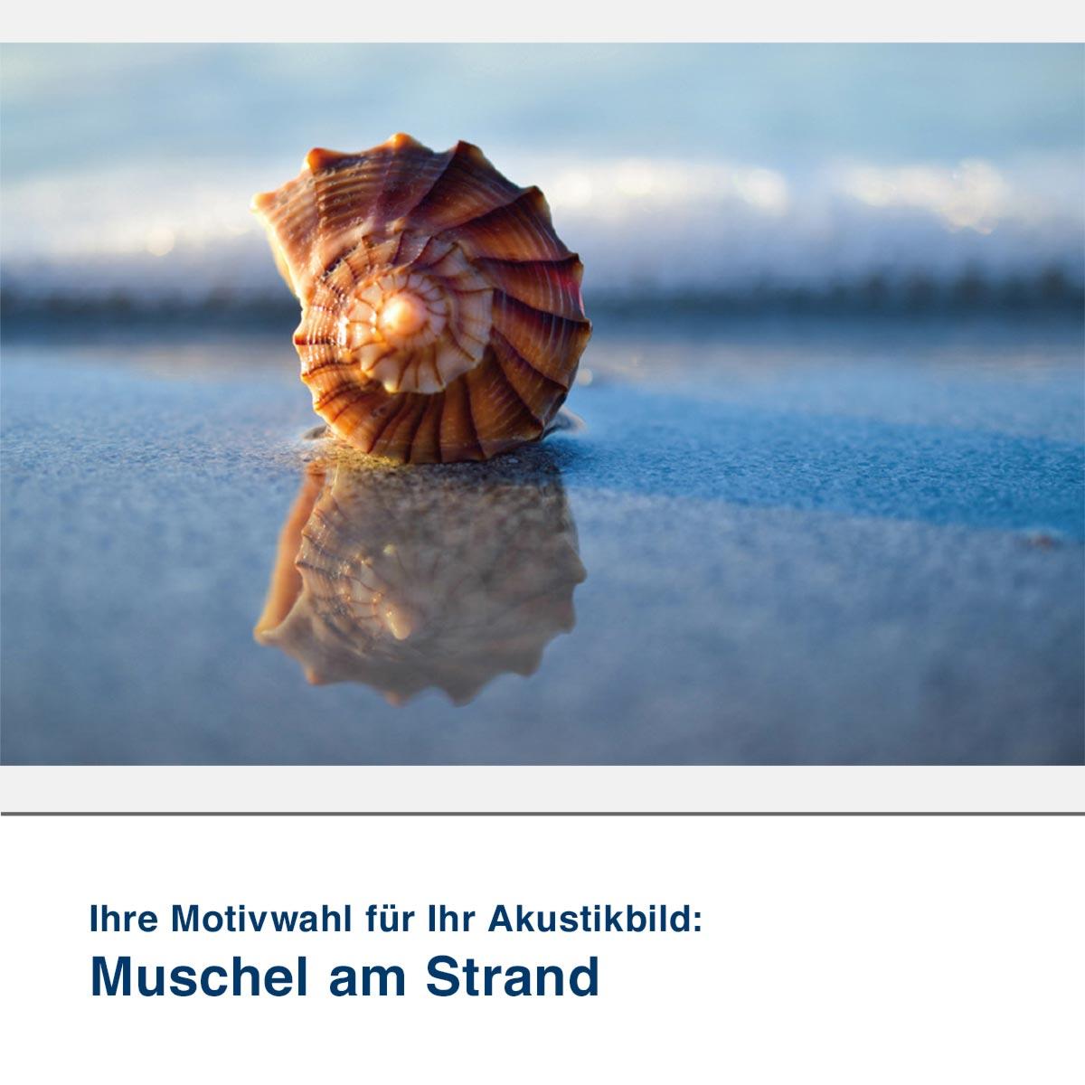 Akustikbild Motiv Muschel am Strand
