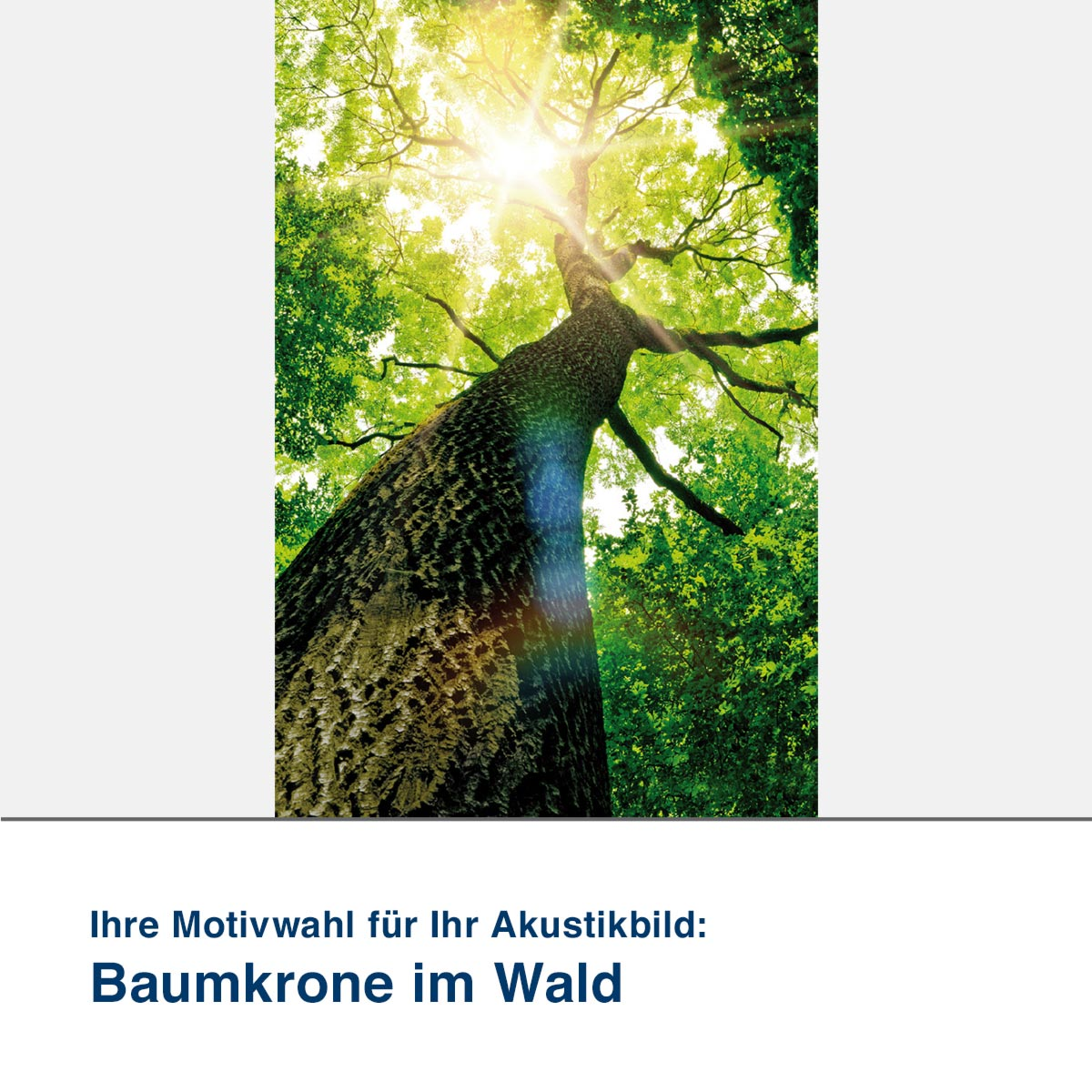 Akustikbild Motiv Baumkrone im Wald