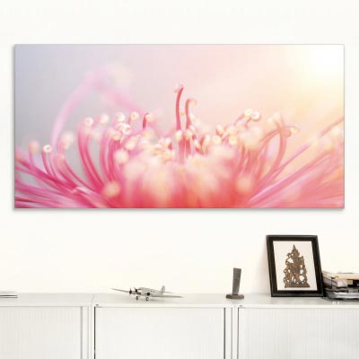 Akustikbild rote Chrysantheme