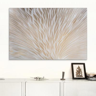 Akustikbild Weiße Pilz-Lamellen