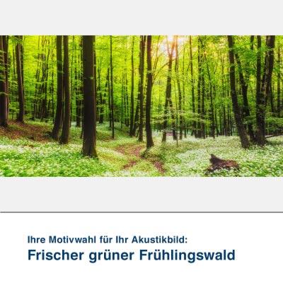 Akustikbild Motiv Frischer grüner Frühlingswald