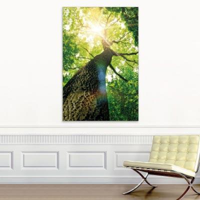 Akustikbild Baumkrone im Wald